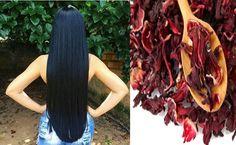SHAMPOO DE HIBISCO CASEIRO PARA o CABELO CRESCER URGENTE Veja a Receita de um Poderoso Shampoo de Hibisco, que Vai Fazer o Seu Cabelo ficar Gigante. Venha aprender comigo como  fazer o seu shampoo para o cabelo crescer. Clique e Confira...  http://www.aprendizdecabeleireira.com/2017/06/shampoo-hibisco-caseiro-cabelo-crescer.html