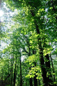 Nagano, Japan  手を振っているみたいに、透き通る葉がキラキラと揺れる。 | トモレンズ