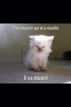 chat démoniaque