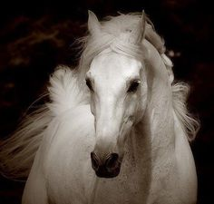 purity -- [REPINNED by All Creatures Gift Shop]