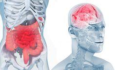 Une nouvelle thérapie, centrée sur les intestins, permet de nettoyer au sens propre les émotions négatives : angoisses, tristesse, dépression. En effet, l'intestin évacue les restes de l'alimentation que votre corps ne peut digérer, mais il a aussi pour fonction d'évacuer les reste des hormones des émotions : sérotonine, acétylcholine, noradrénaline, GABA. Tout comme il … Sports Nutrition, Health And Nutrition, Health And Wellness, Health Fitness, Gut Health, Full Body Program, Holography, Relaxing Yoga, Massage