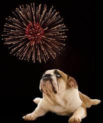 Setting off firecrackers at home? Leave your dog in the house & away from the loud noises. This is one of the stressful days of the year for dogs! Rescue Dogs, Animal Rescue, Pet Odors, Dog Years, Dog Walking, Fireworks, Best Dogs, Your Pet, Dogs And Puppies