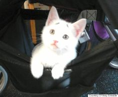 Concerned Kitten Just Wants To Know How Your Day Is Going