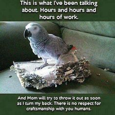 Clover, a Congo African Grey parrot shows off some of her 350 word vocabulary. Funny Birds, Cute Birds, Pretty Birds, Beautiful Birds, Funny Animal Pictures, Funny Animals, Cute Animals, Animal Funnies, Animal Memes