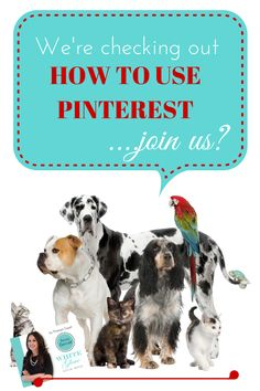 Top Social media Service on web They have cheapest softwares and packages for pinterest , facebook , tribpro etc. to improve your followers