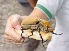 #Datoanimal De las más de 500mil especies de #animales que posee Costa Rica, cerca de 300mil son insectos #VetsMexico