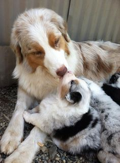 Cute Overload : dogs and their puppies.