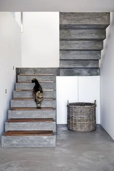 16 Super Cool Concrete Staircase Ideas - - These days, a concrete staircase is really famous for a modern house. The design of staircase with its concrete material is simple and easy to make. It is another option for you who want to design you. Concrete Staircase, Wooden Staircases, Staircase Design, Concrete Floors, Stairways, Staircase Ideas, Spiral Staircases, Wood Stairs, Stone Stairs
