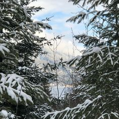 Wee lake views thru the snowy trees on our hike this morning. There is blue sky up there! Snow is ever so softly falling. Snowy Trees, Tree Tops, Lake Life, British Columbia, Wilderness, Lush, Hiking, Sky, Fall
