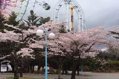 Tia gorman amusement park