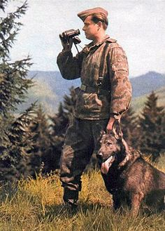 DDR German Shepherds are named for the Deutsches Demokratische Republik (German Democratic Republic) or what is known in English as East Germany. The DDR was formed in 1949 at the end of the World War II.