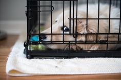 Having a crate will make your life easier for you and your pup. Here are some simple, easy tricks to help you tackle crate training your puppy.