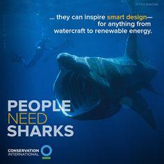 People Need Sharks - Little Bristles | #Salinas | #CA | www.littlebristlespediatricdentistry.com