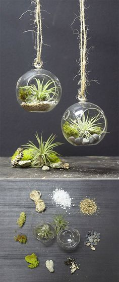 "MINI HANGING AIR PLANT TERRARIUM :: Find 3"" bubble vases at save-on-crafts.com. Fill with perlite, coarse sand and small stones. Add dormant mood moss, reindeer moss, dried lichen and a live Tillandsia plant. Care: Water 1x/week with a mini spray bottle (distilled water is best as tap water can cause the plant's cell walls to clog since that's how they absorb water"
