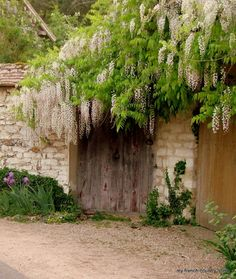 my french country home: wisteria over french gates White Wisteria, My French Country Home, French Countryside, White Gardens, Garden Gates, Dream Garden, Garden Planning, Garden Inspiration, Design Inspiration