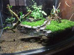 Image result for turtle terrarium ideas
