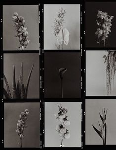 Moody florals mood board black and white, flower styling and photography, moody wedding and brand design, feminine inspo. Aesthetic Art, Aesthetic Pictures, Film Photography, White Photography, Sequence Photography, Pattern Photography, Sogetsu Ikebana, Polaroid Frame, Photo Portrait
