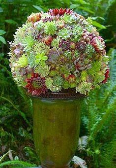 Potée de succulentes