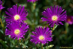 Flores Bonitas Related Keywords & Suggestions - Flores Bonitas ...