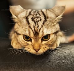 Angry kitten somewhere in Lithuania :) | Internet memes ...