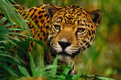 Miles de especies de animales y plantas de México desplegadas en un sitio amigable y dinámico.