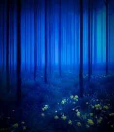 Absolutely very beautiful love this beautiful blue forest picture