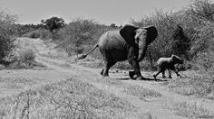 """Each week BBS publishes a gallery of readers' pictures on a set theme. This week the theme is """"Kenya"""" and we begin with an image taken by Tom Paveley, who said: """"I'm not sure who was more surprised - us or the elephants. This cycle safari near Nanyuki took us closer than we had expected."""""""