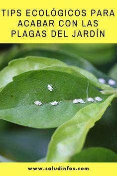 Tips ecológicos para acabar con las plagas del jardín #ecológicos #plagas #jardín