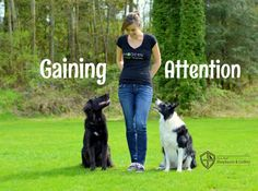How to Gain Your Distracted Dog's Attention