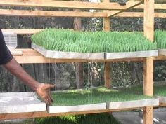 Feeding Sprouts - YouTube
