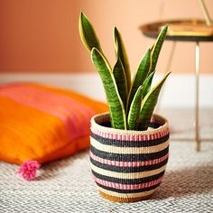 Handwoven sisal basket, available in different patterns and sizes. Christmas Gift Decorations, Unique Christmas Gifts, Flower Decorations, Cactus, Basket Weaving, Hand Weaving, Woven Baskets, Christmas Baskets, Cool Plants