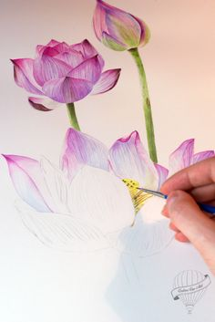 63 ideas tattoo watercolor lotus paintings for 2019 Watercolor Lotus, Lotus Painting, Silk Painting, Watercolor Landscape, Watercolor Illustration, Watercolour Painting, Watercolor Flowers, Tattoo Watercolor, Watercolors