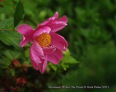 Mark Fisher American Photographer™: Movement Within The Petals • American Photographer...