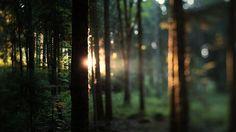 L'Espirt de la Forêt  / Jonathan Duriaux