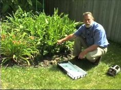 Extension horticulturist Richard Hentschel demonstrates the importance of digging summer bulbs and protecting them in winter storage. Summer Bulbs, Garden Bulbs, Bulb Flowers, Container Gardening, Garden Landscaping, Veggies, Yard, Landscape, Videos