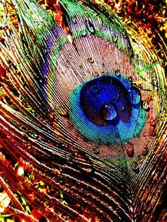Sunset Peacock Feather by RainbowAnomaly on DeviantArt Peacock Images, Peacock Pictures, Peacock Art, Peacock Feathers, Peacock Colors, Peacock Wings, Picture Of A Peacock, Feather Drawing, Feather Art