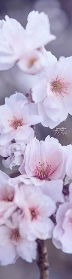spring.quenalbertini: Spring flowers   Téa Tosh