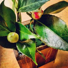 Budding flowers. #flowers #green #red #wood #pretty #plant
