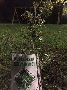 CAPITAN FUTURO: A Montecarlo piantato un leccio dal gruppo ecologi...