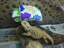 SML COTTON TAIL PRINT ATTACHABLE RESTIN BED COVERS 4 JUVENILE BEARDED DRAGON