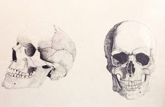 Stipple with black ink #skulls #stipple #art #pen