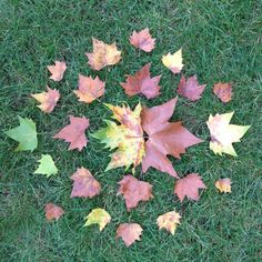 Collect a range of fallen leaves to explore colour and create a unique piece of temporary art to photograph and a share.
