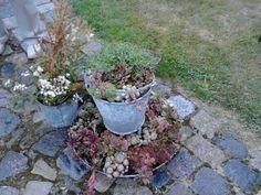 Alte Tränke bepflanzt