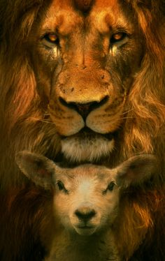 The Lion and the Lamb, by digital artist Phatpuppyart. This image has been all over the internet and (Pinterest especially), yet rarely is the artist given credit. I'm hoping that can change now. This is wonderful work! If you see places this is shown without credit (sometimes they just don't know who created the art), won't you kindly give them the info: Phatpuppyart.com   Thanks!