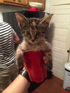 Cat-In-A-Cup - http://cutecatshq.com/cats/cat-in-a-cup/