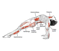Purvottanasana Upward Plank Pose © Leslie Kaminoff's Yoga Anatomy B E N E F I T S — Strengthens your triceps, wrists, back, and legs ... | Loved and pinned by www.downdogboutique.com
