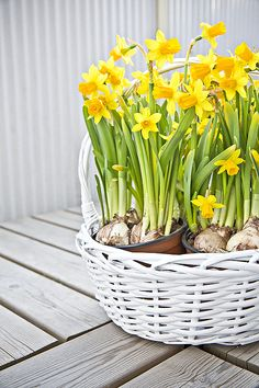 KOTO   Kaupunkikoti Koto in Mikkeli / spring flowers in balcony. You can rent the flat! Flower Pots, Potted Flowers, Korn, Spring Flowers, Balcony, Beautiful Homes, Canning, Flat Picture, Plants
