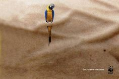 WWF – Don't cut the rain forest.  #advertising