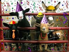 Party on the Farm