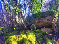 169 Best Roscommon, Ireland images | Roscommon, Ireland